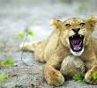 3 benefits of an African Safari