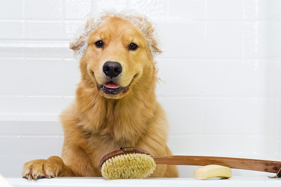 Did You Know That Epsom Salts Can Benefit Your Dog? Here's How