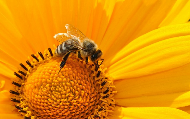 3 Amazing Benefits Of Bee Pollen