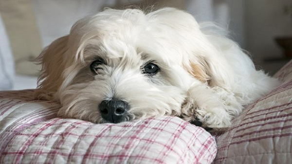 Health Benefits of Comfortable Dog Bed