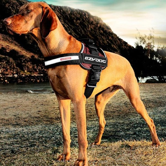 The Benefits of Choosing an Ezydog Harness for the Daily Walks with Your Dog