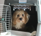 Benefits of Using a Pet Transport Company for Your International Move