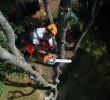 The Benefits of Using a Professional Tree Care Company