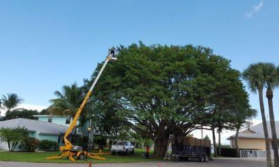 Tree shaping service