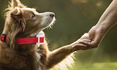 Are Anti Bark Collars Safe