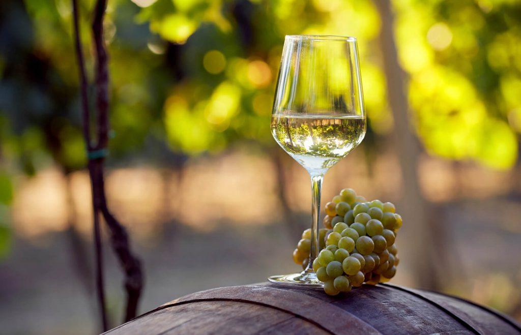 chardonnay wine white grape